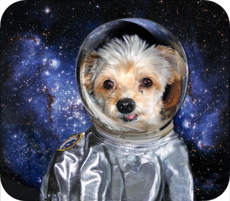 Image result for space dog